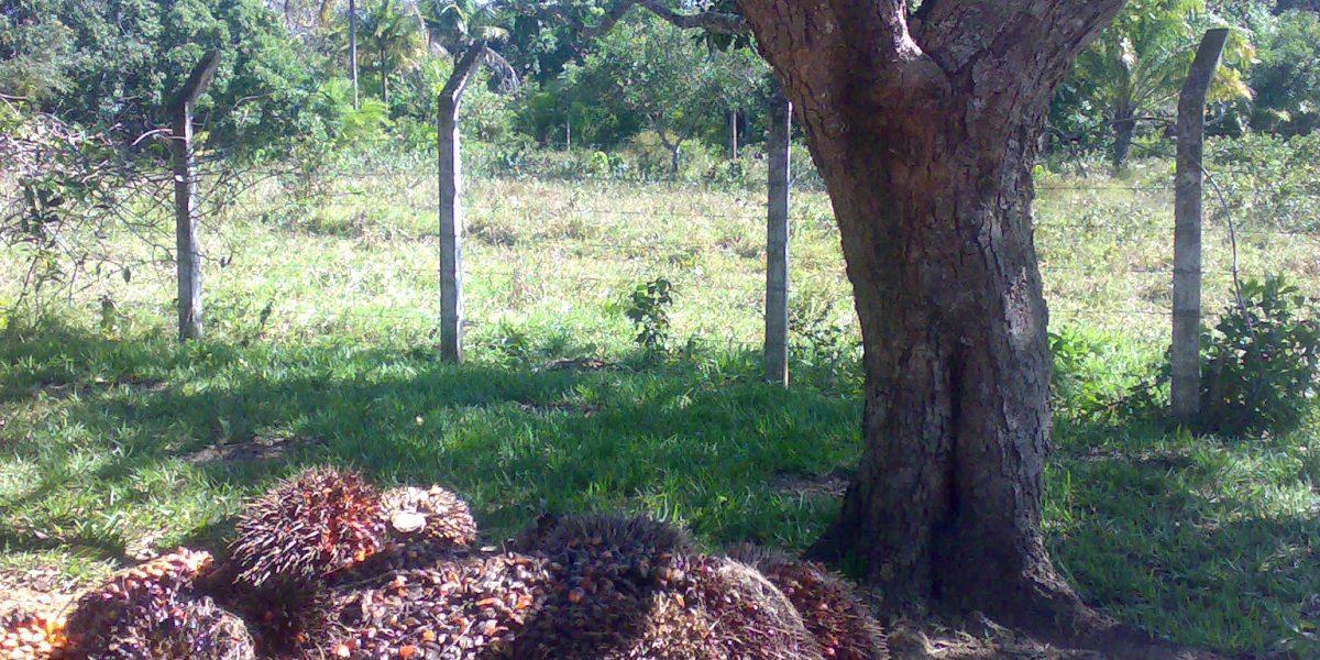 Procesos de cambio de uso de suelo para la producción de Palma en la Amazonia Andina Peruana