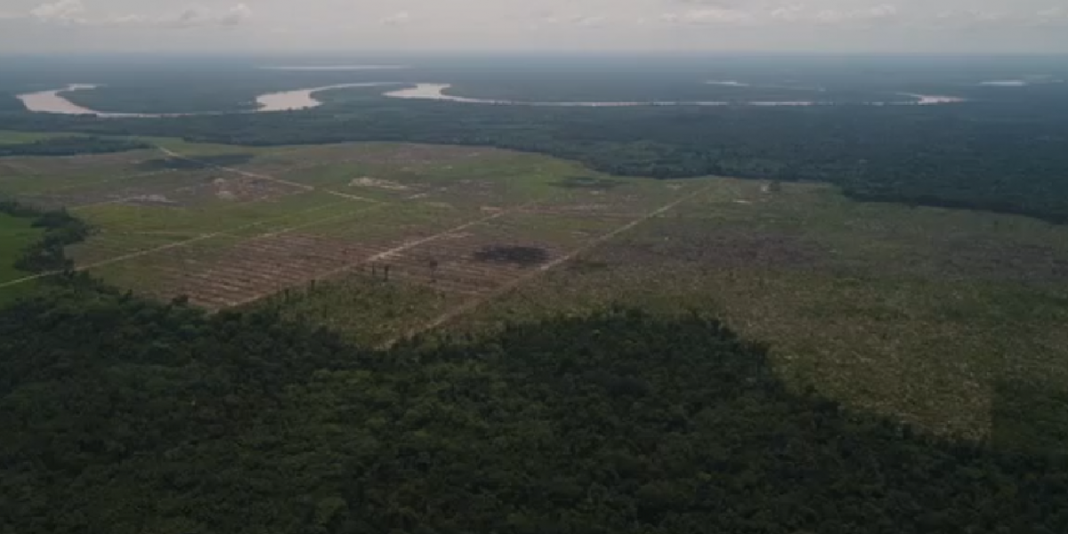 El 2017 se destruyeron más de 1.500 kilómetros cuadrados de bosque