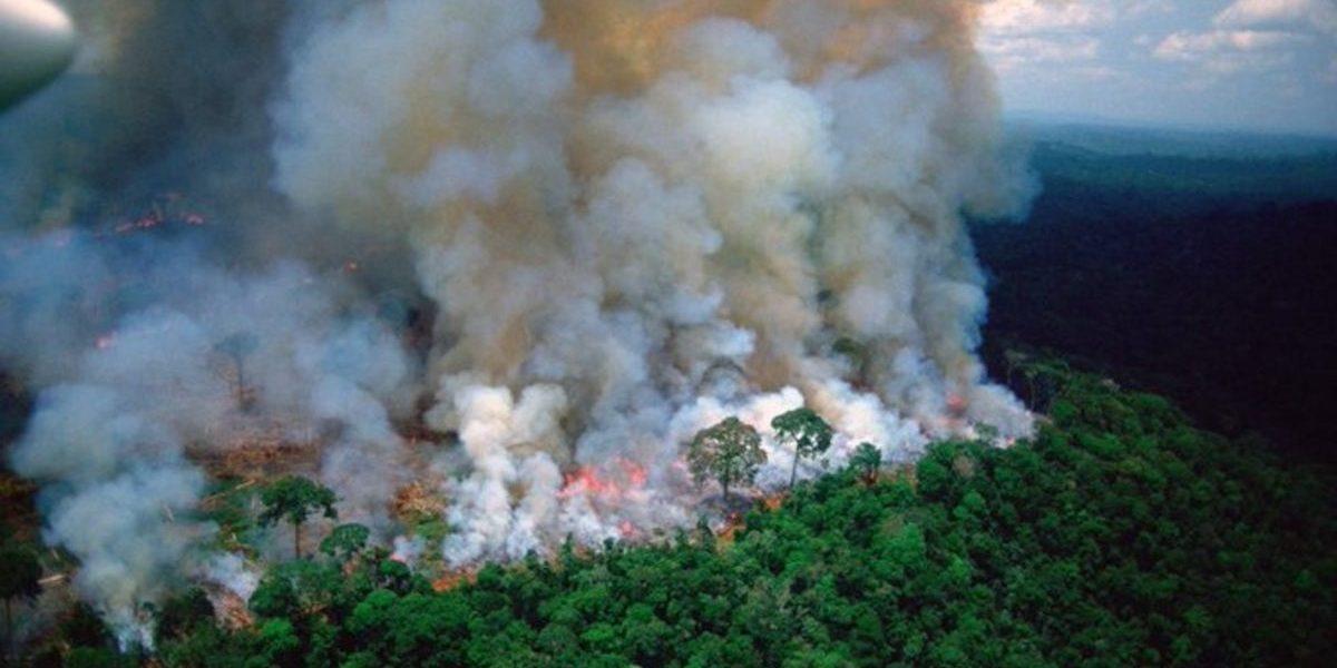 Una década para reparar los incendios forestales