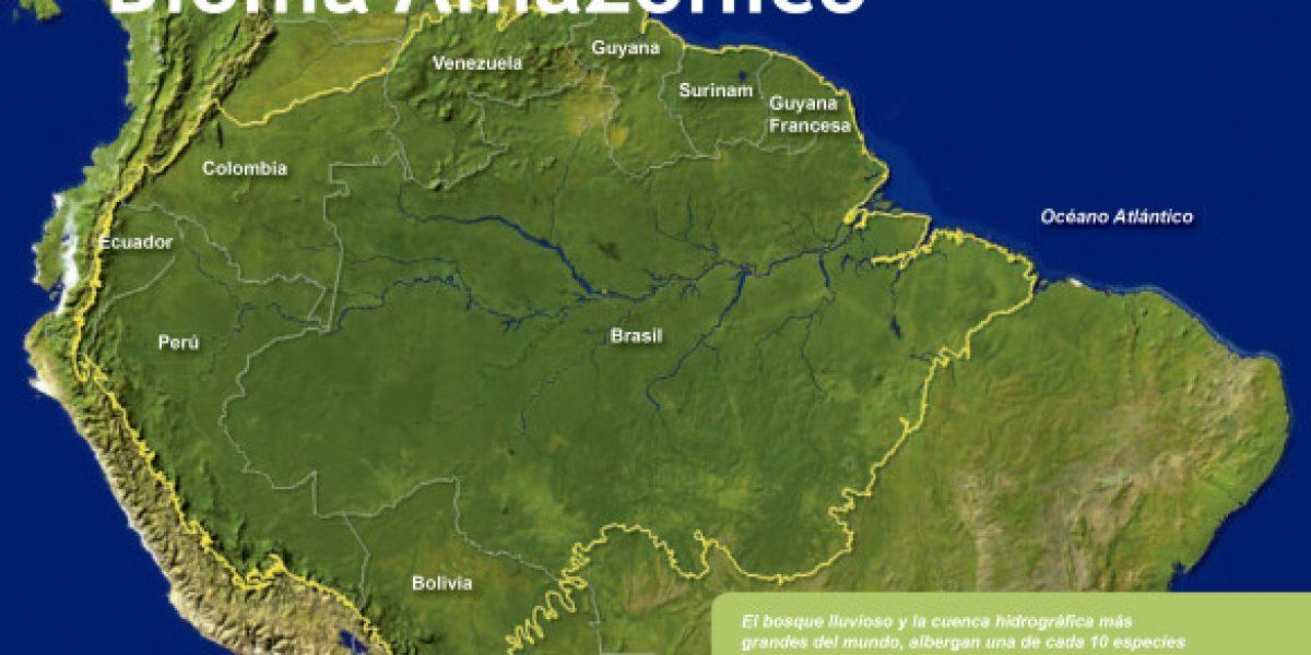 ¿Qué perdemos con la desaparición progresiva de la Amazonía?