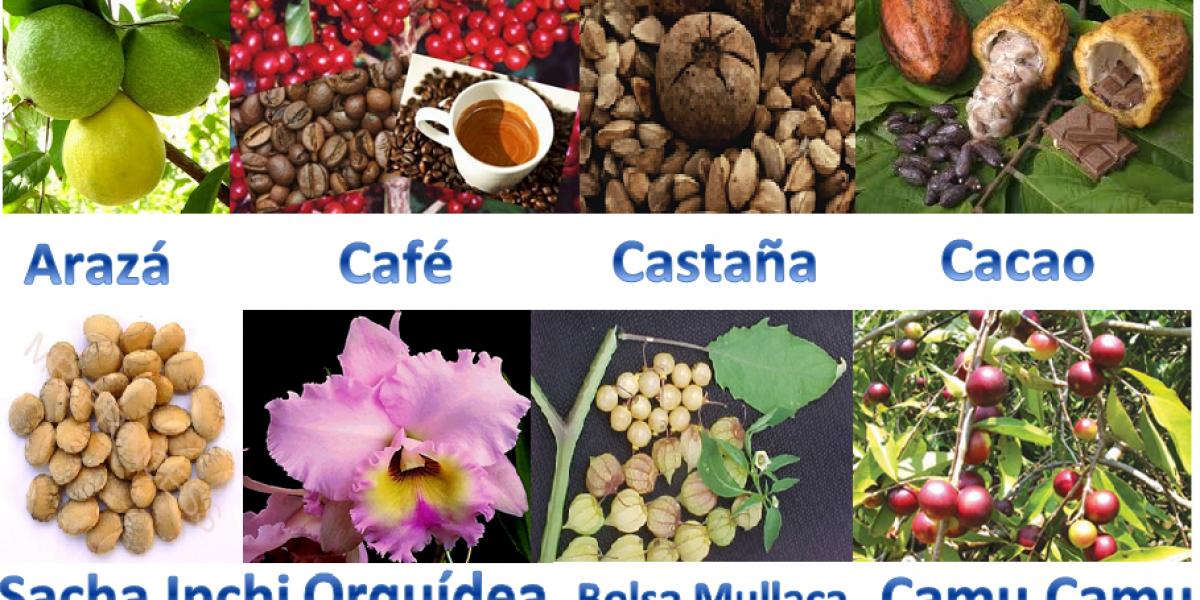 Perú tiene gran potencial económico en productos naturales amazónicos