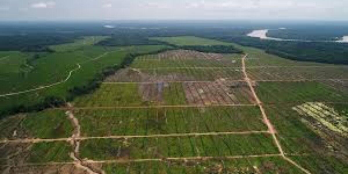 ¿La pandemia redujo la deforestación en la región San Martín en el 2020?