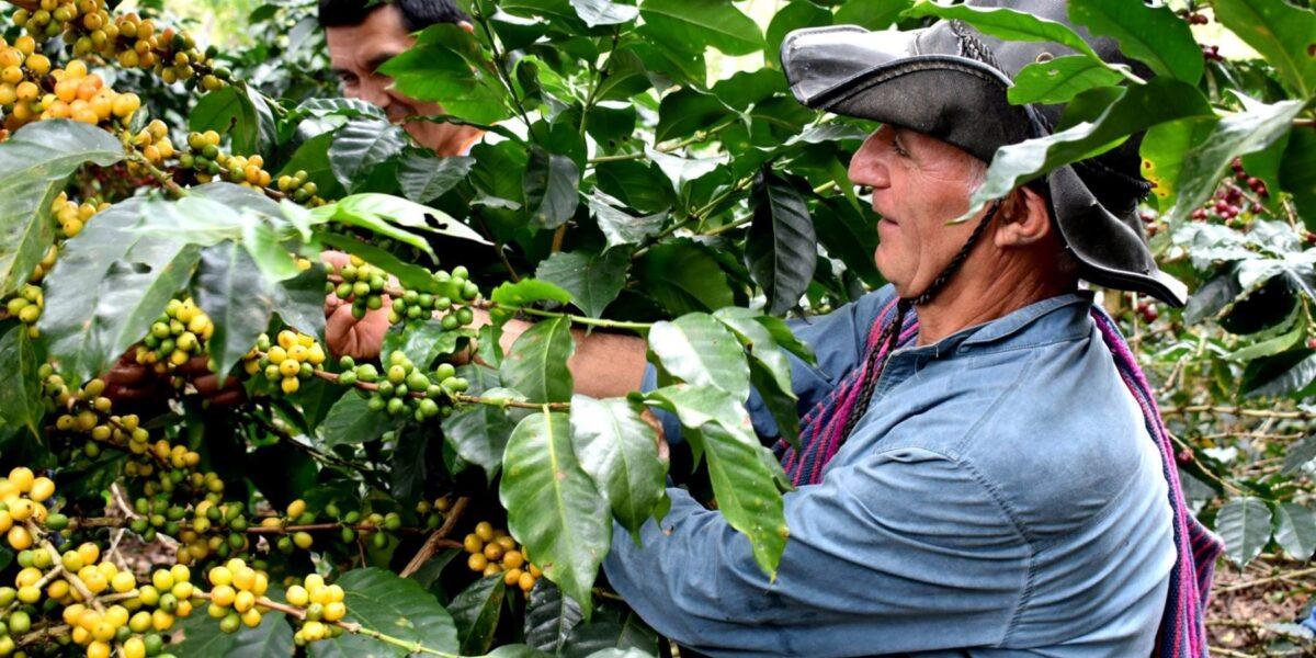 ¿Qué ofrece a la agricultura Pedro Castillo, el candidato sorpresa que es casi fijo en la segunda vuelta presidencial?