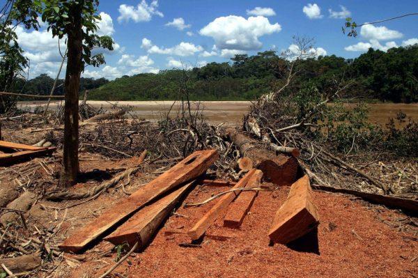 la-deforestacic3b3n-de-la-selva-amazc3b3nica-brasilec3b1a-cayc3b3-40-por-ciento-entre-marzo-y-abril